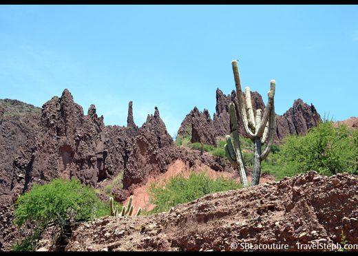 Cactus géant (5 mètres de haut) à Tupiza, en Bolivie