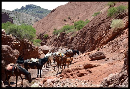 Chevaux dans une rivière asséché à Tupiza, en Bolivie